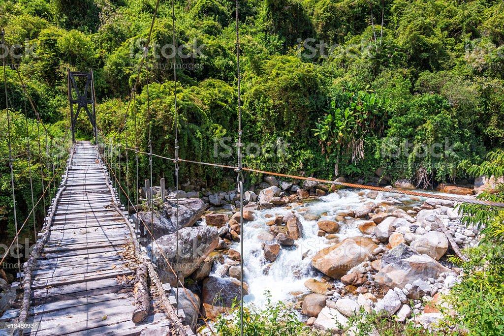 Suspension Bridge in Jungle stock photo