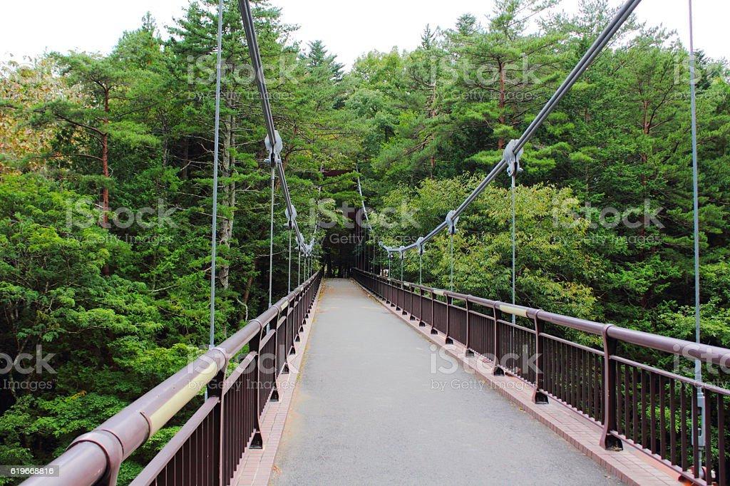 Suspension bridge located in a forest stock photo