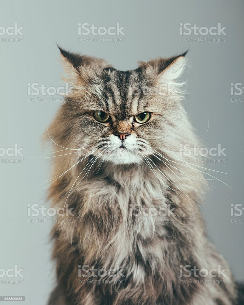 Suspicious cat portrait stock photo