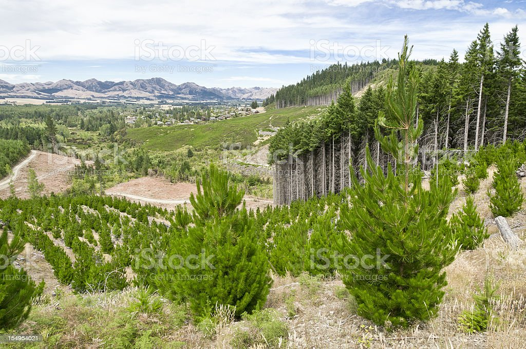 Sustainable Forestry Management stock photo