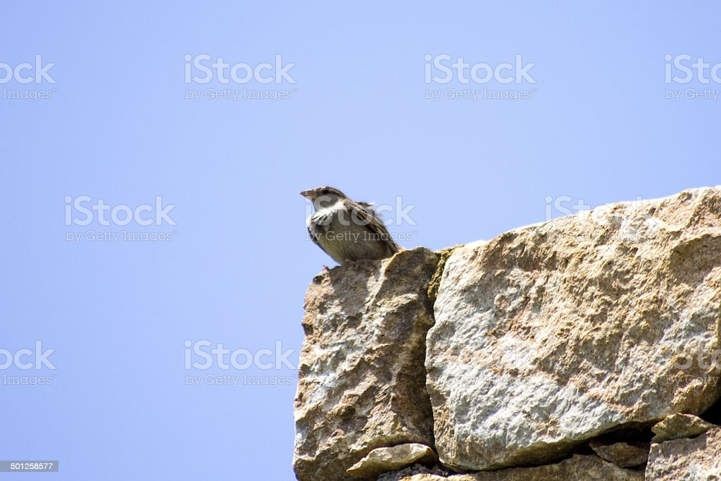 Swallow atop the wall stock photo