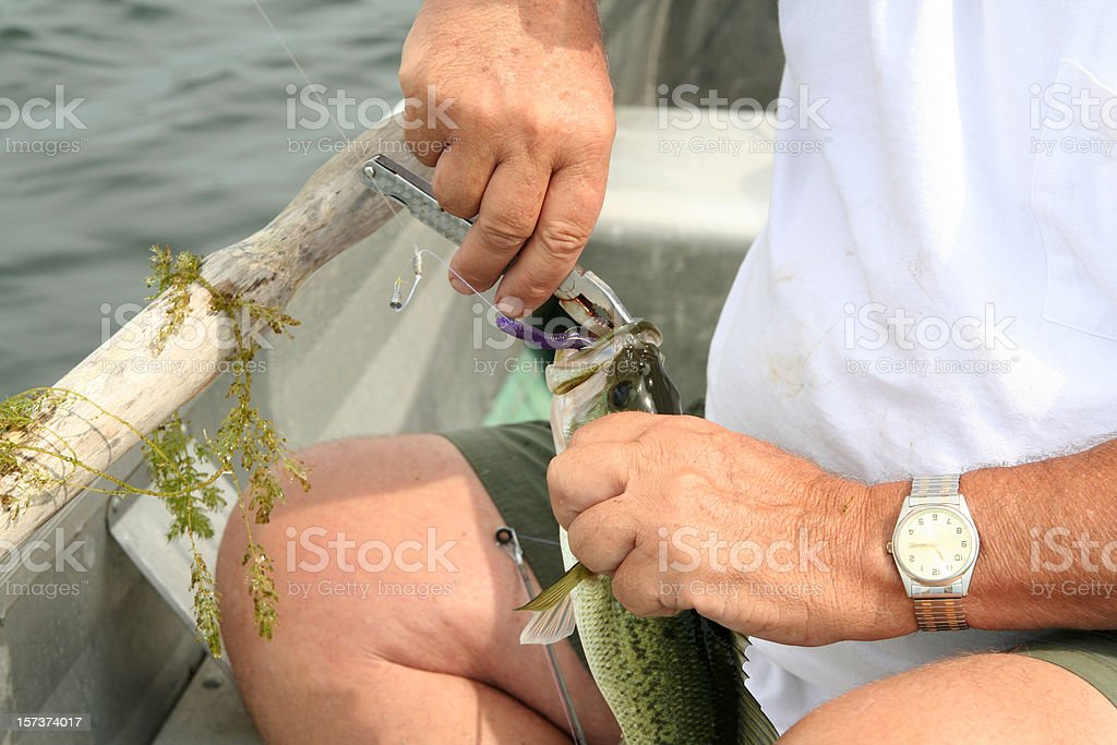 Swallowed the Hook royalty-free stock photo