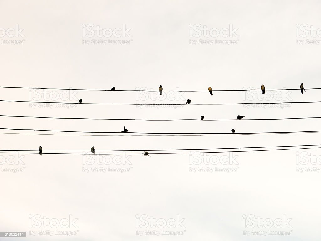 Swallows in electric wire likes musical score or guitar cords stock photo