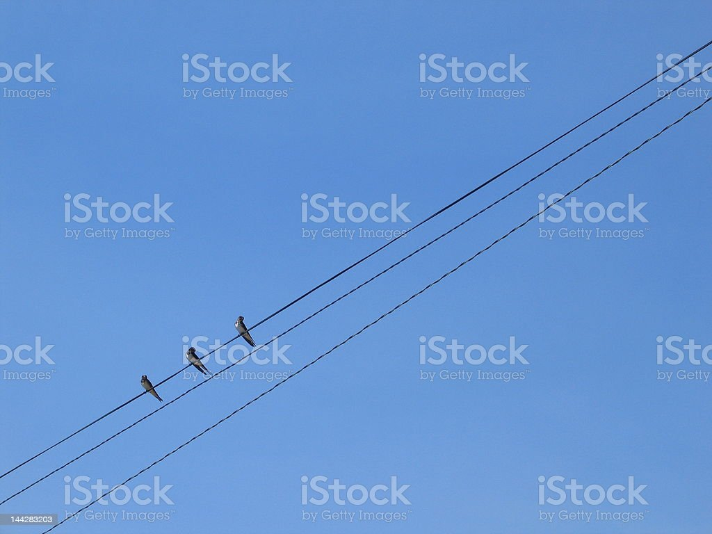 Swallows on a power line royalty-free stock photo
