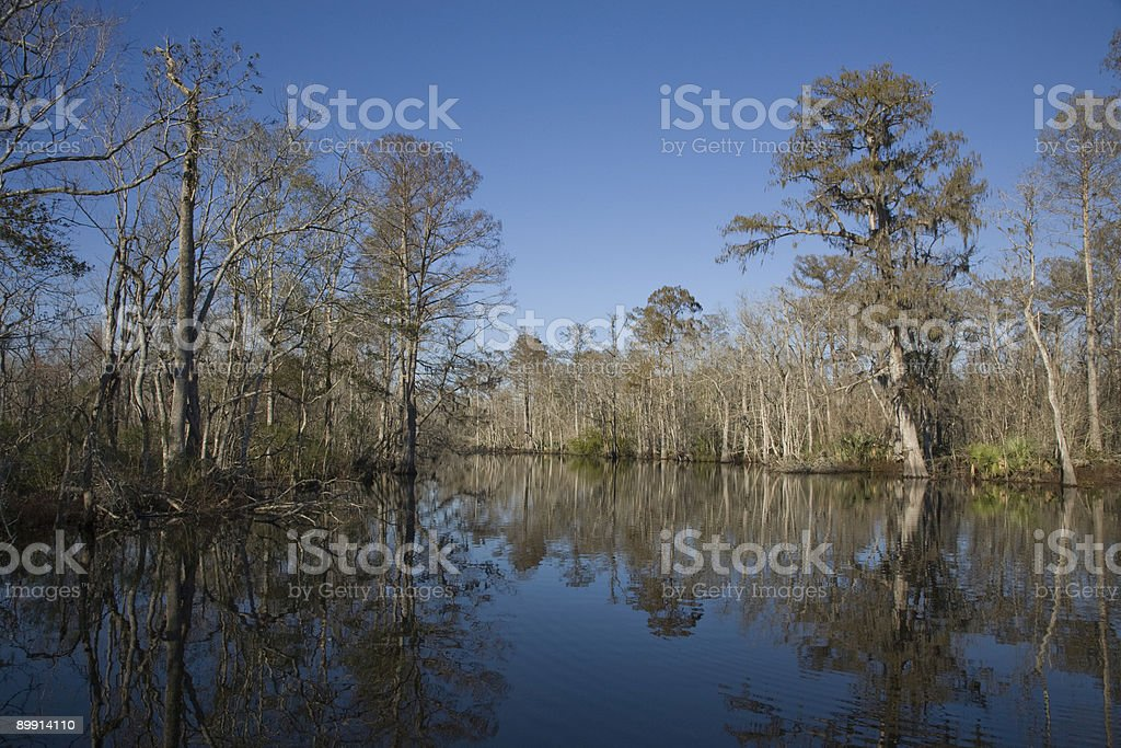 Swamp 19 stock photo
