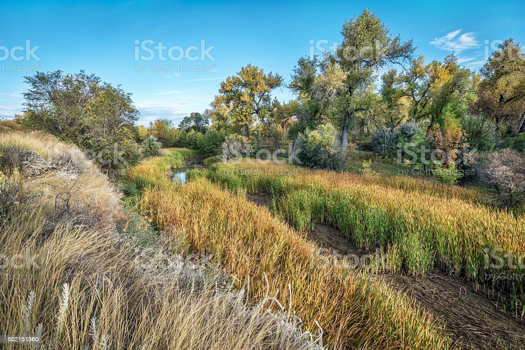 swamp and riparian forest in eastern Colorado stock photo
