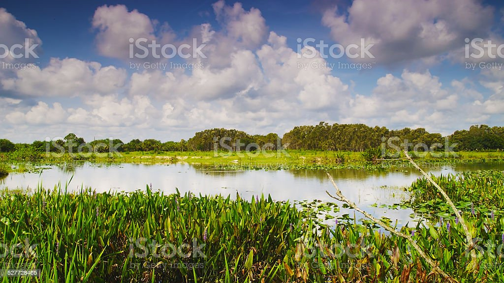 Swamp and Wetlands in Big Cypress National Preserve in Florida stock photo