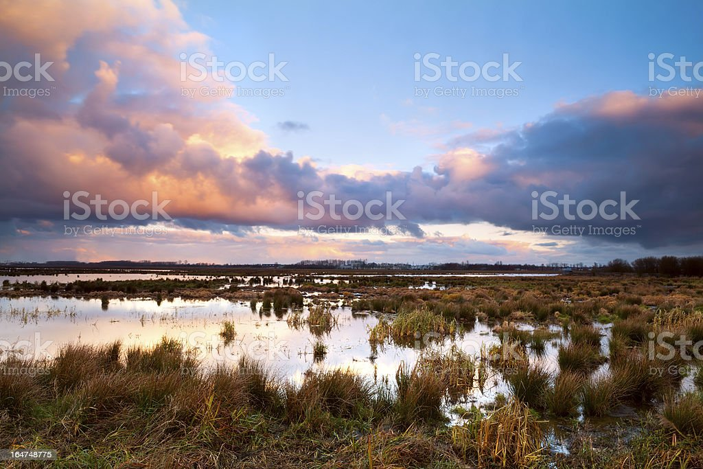 swamp at dramatic sunrise royalty-free stock photo