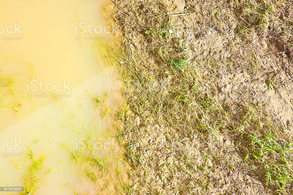 Swamp background seen from above stock photo