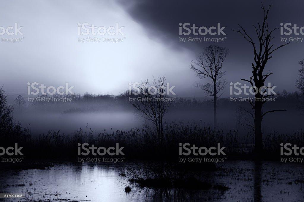 Swamp, Fog, Dark Landscape stock photo