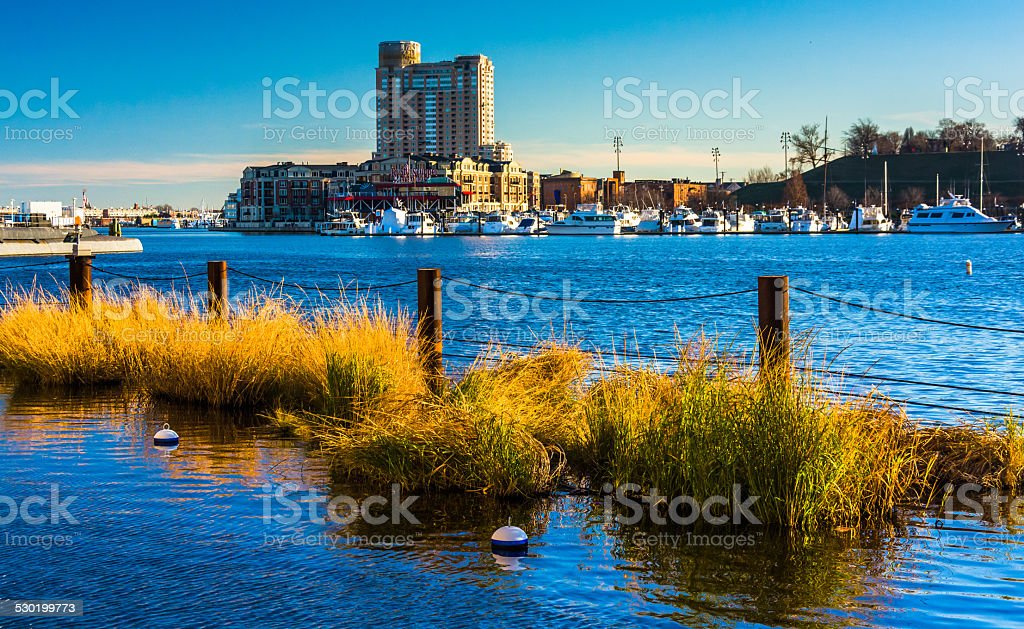 Swamp grasses in the Inner Harbor of Baltimore, Maryland. stock photo