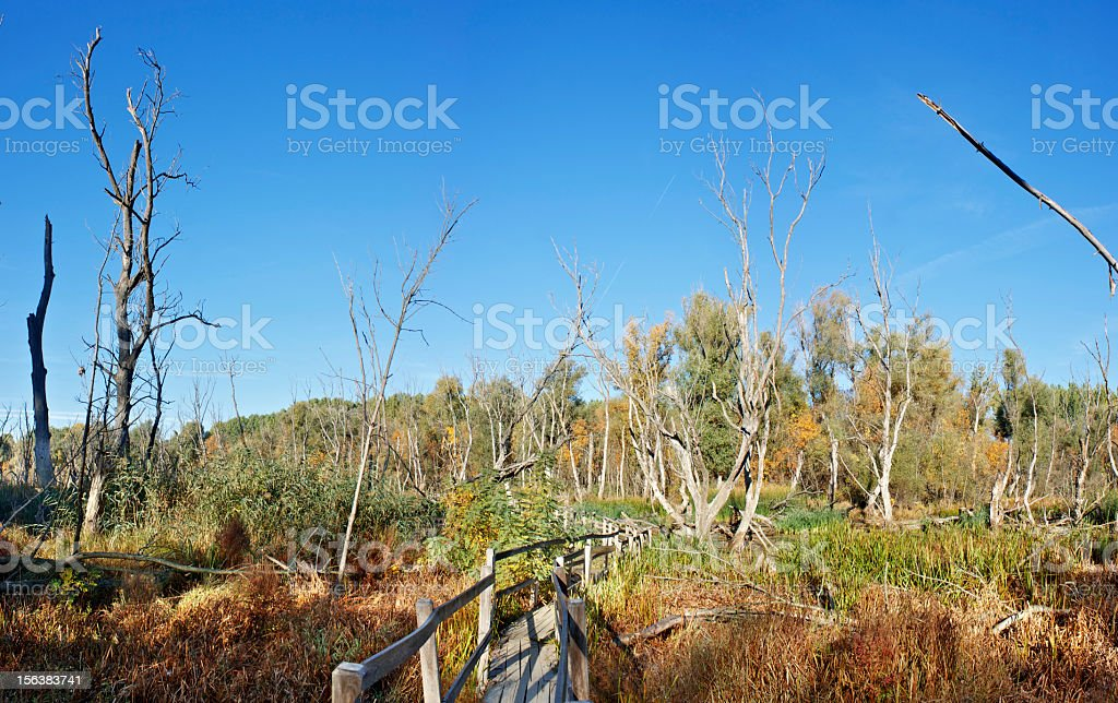 Swamp in autumn royalty-free stock photo