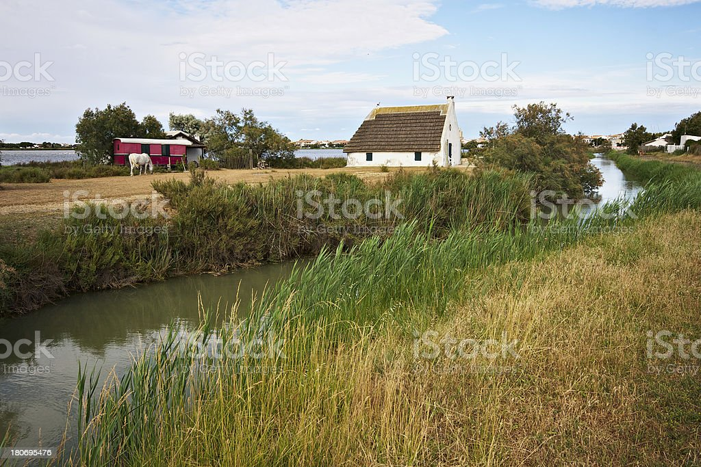 Swamp in French Camargue. Saintes-Maries-de-la-Mer. France stock photo