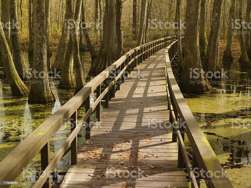 Swamp in Mississippi stock photo