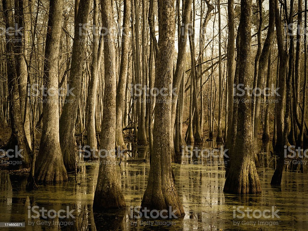 Swamp in Mississippi royalty-free stock photo