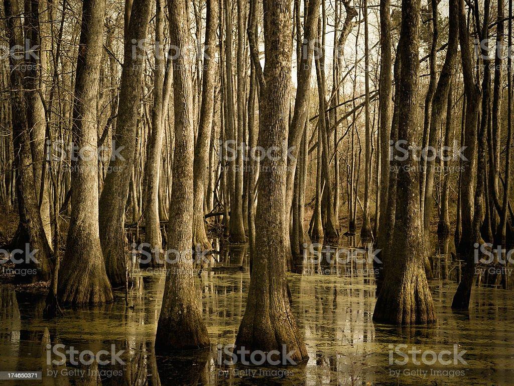 Swamp in Mississippi stock photo