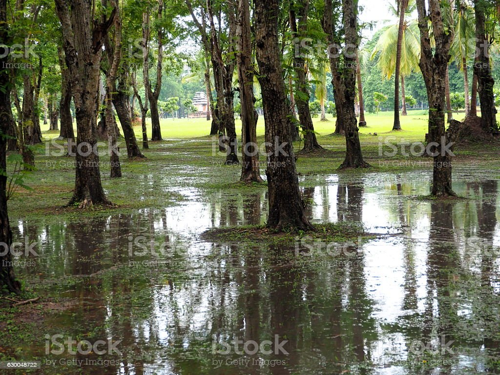 Swamp in National Park. stock photo