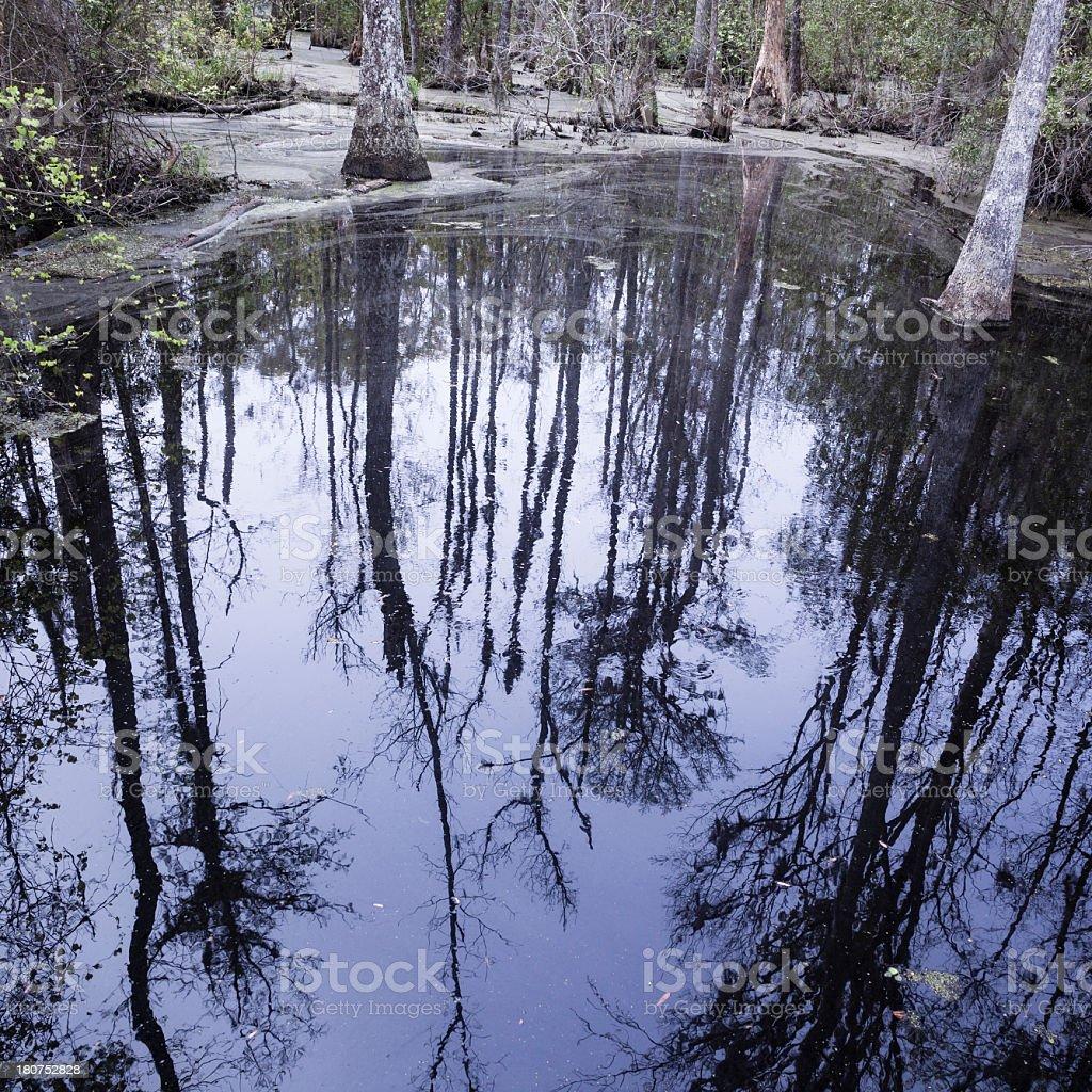 Swamp in South Carolina, USA royalty-free stock photo