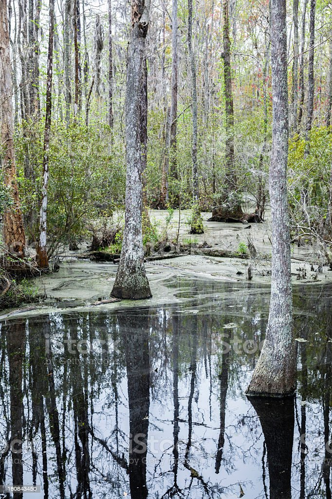 Swamp in South Carolina, USA royalty-free stock photo