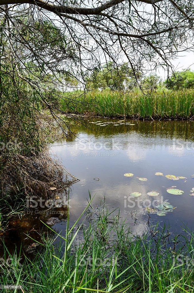 Swamp in Thailand stock photo