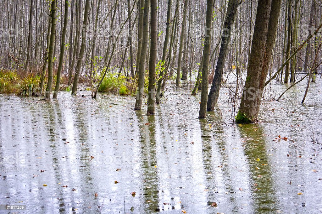 Swamp in the Forest. stock photo