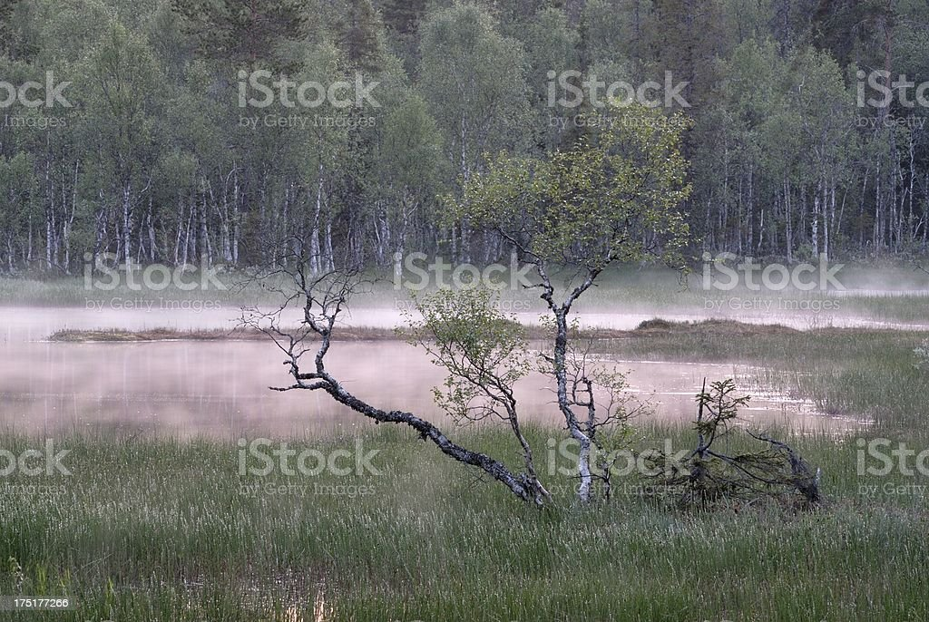 Swamp in Twilight royalty-free stock photo