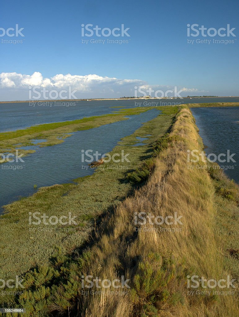 Swamp in Vendee, France royalty-free stock photo