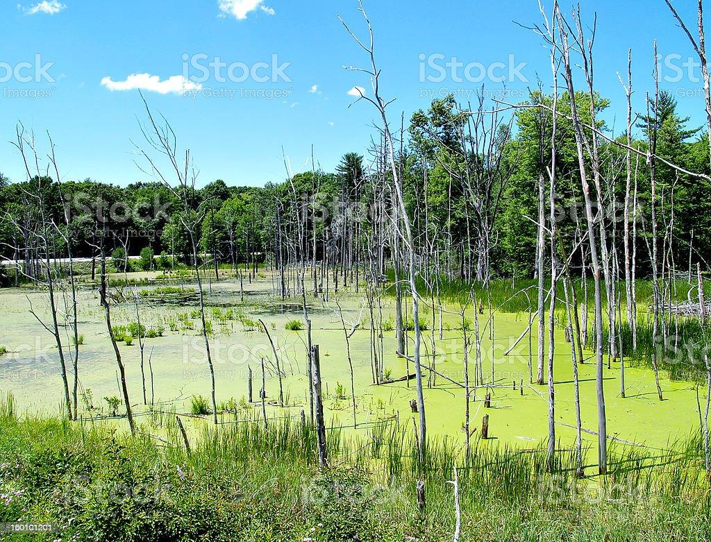 Swamp Land stock photo