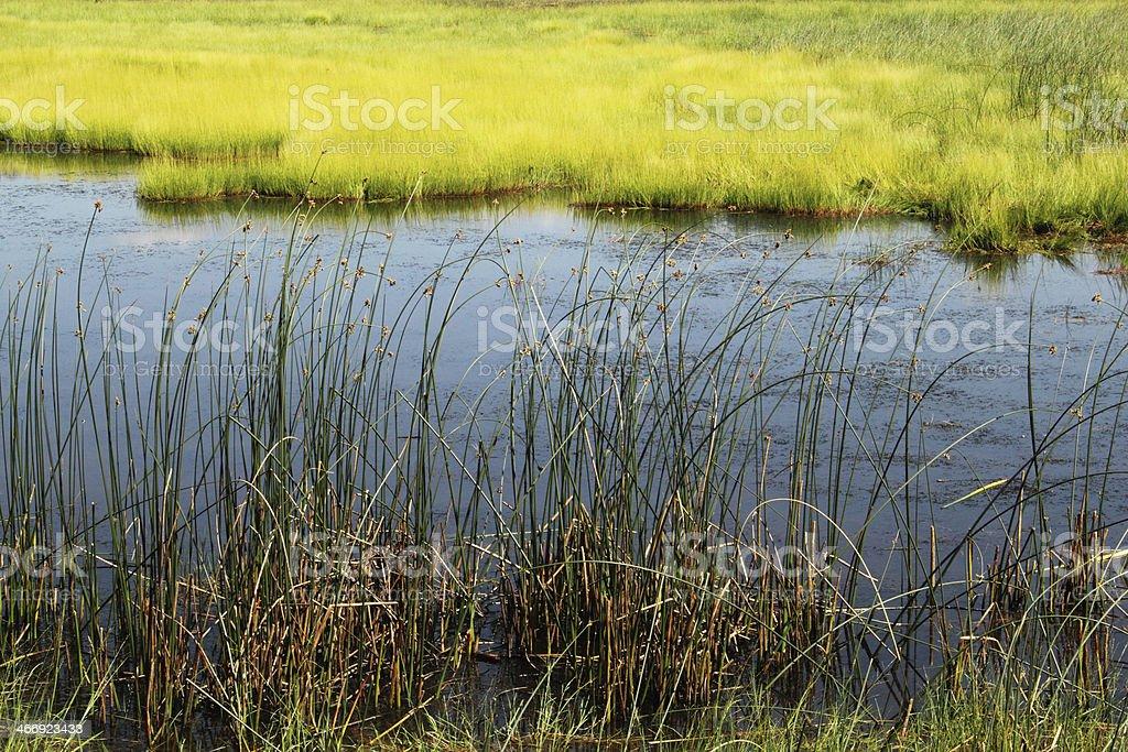 Swamp Marsh Pond Water royalty-free stock photo