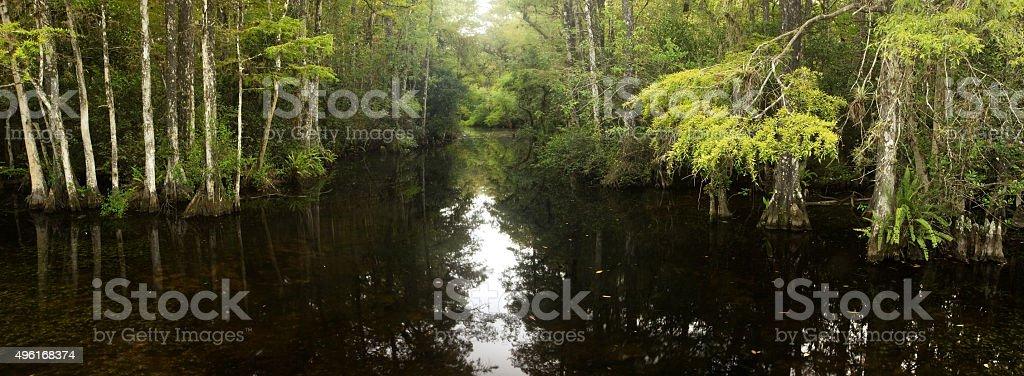 Swamp Panorama stock photo