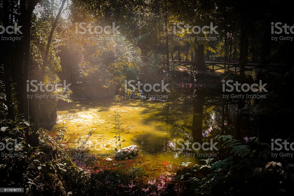 swamp stock photo
