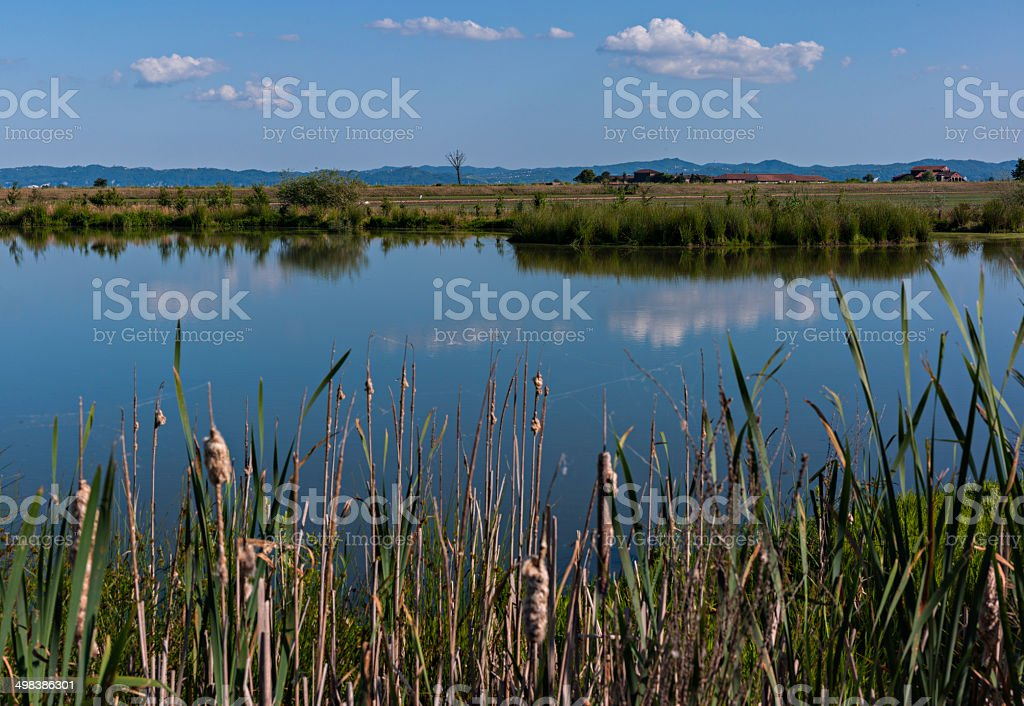 Swamp plants, water and clouds near Livorno Ferraris, Piedmont, Italy stock photo