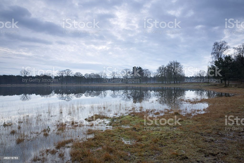 Swamp pool in winter stock photo