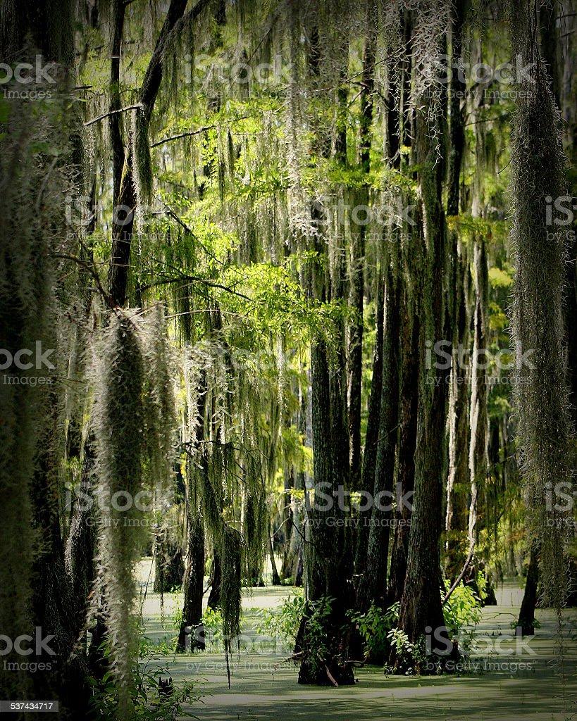 swamp scene stock photo