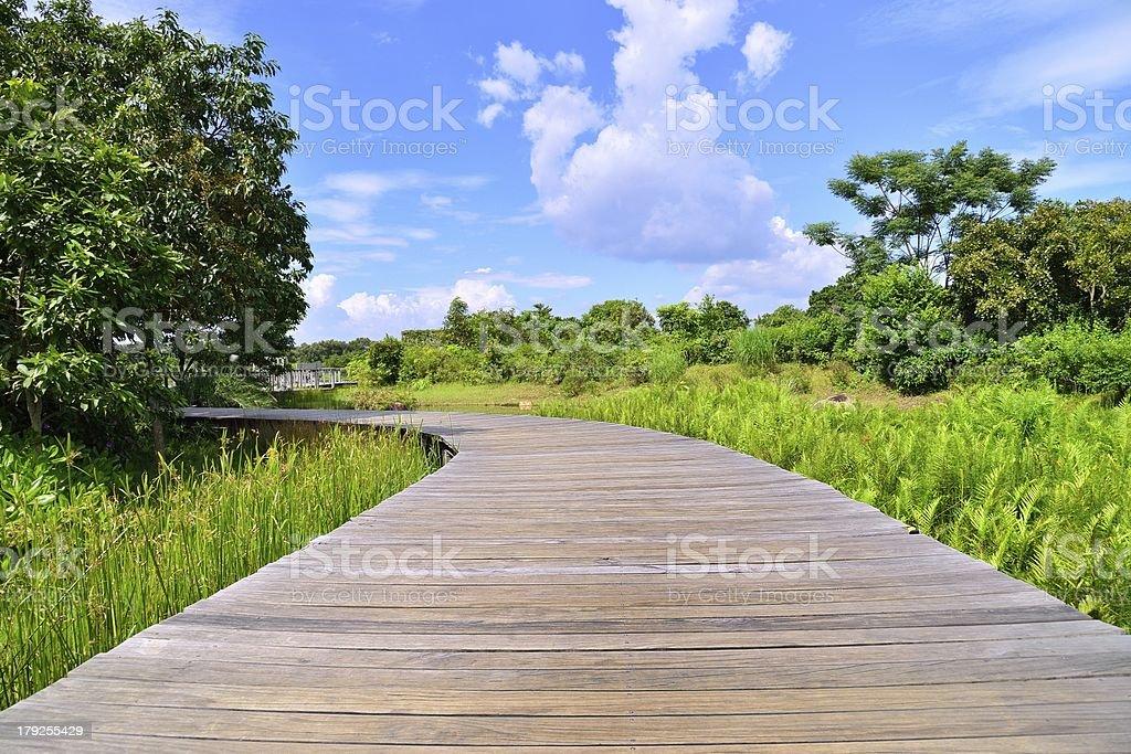 Swamp Trail royalty-free stock photo