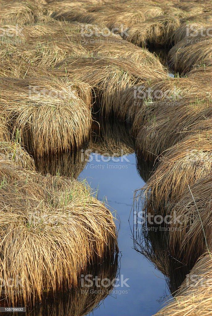 Swamp Water brown gras stock photo