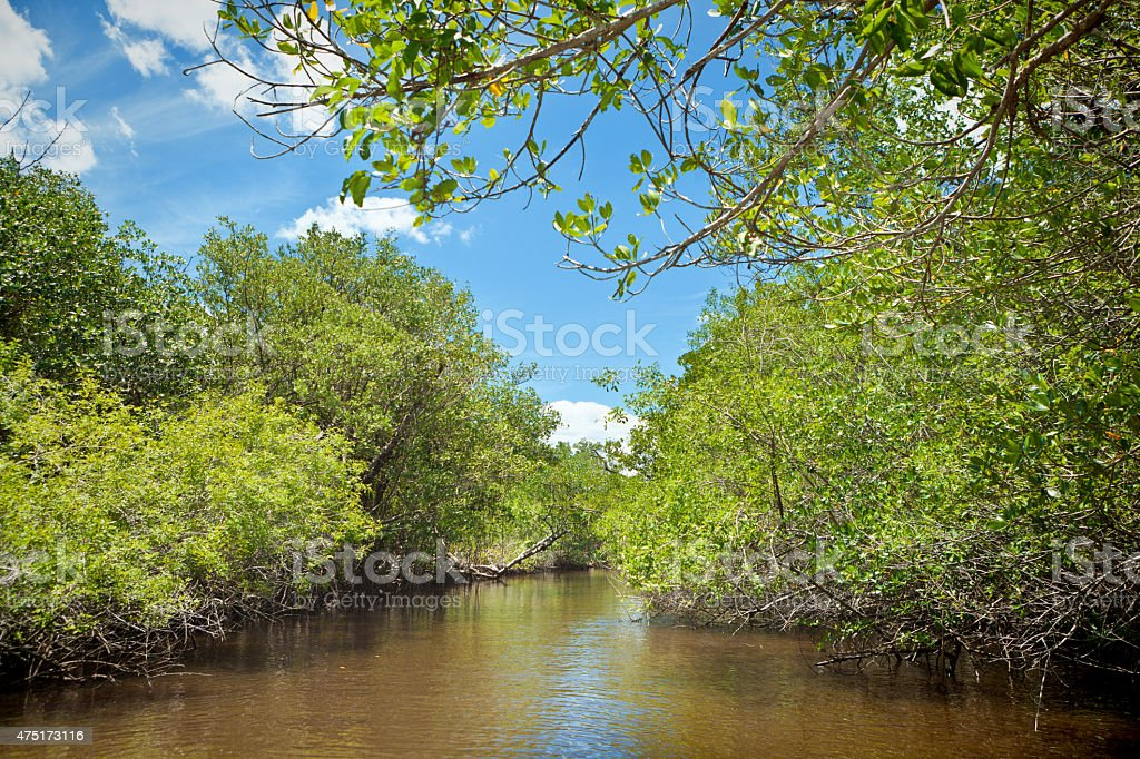 Swamp Wetland Mangrove Landscape in Everglades National Park, Florida USA stock photo