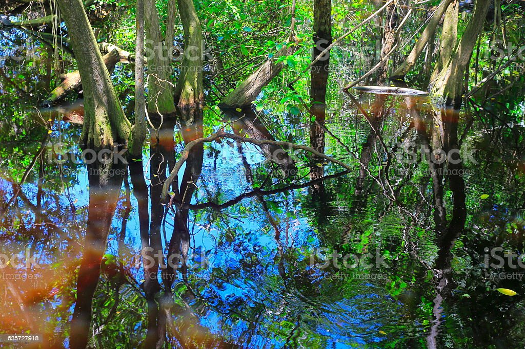 Swamp Wetland Mangrove tropical rainforest, tree trunks and roots Landscape stock photo