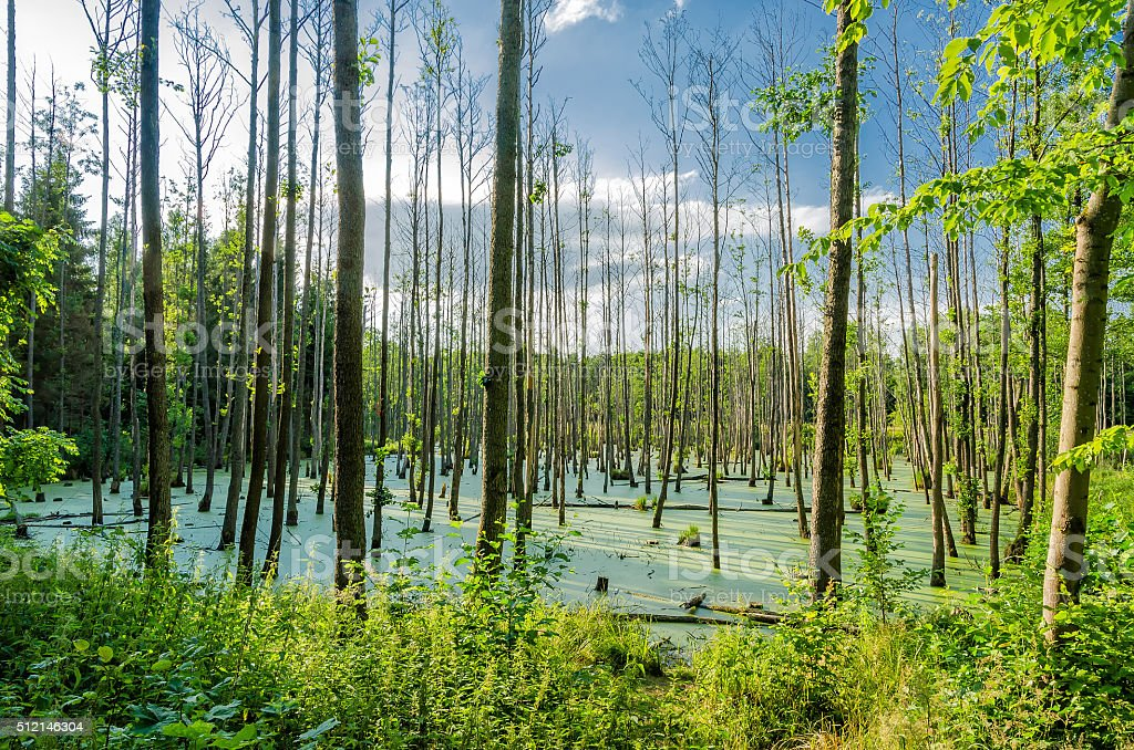 Swampland stock photo