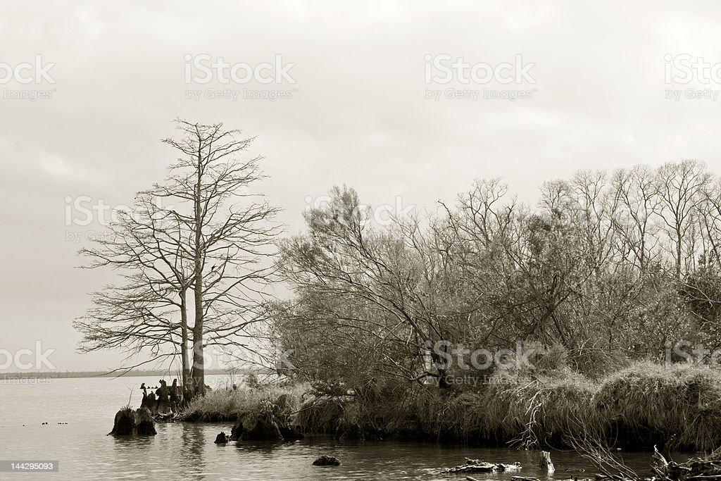 Swamp's Edge royalty-free stock photo