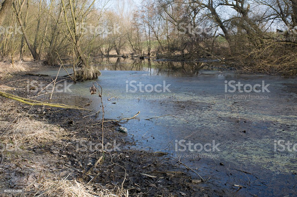 Swamps in autumn. Cool dark lake in primeval forest. stock photo