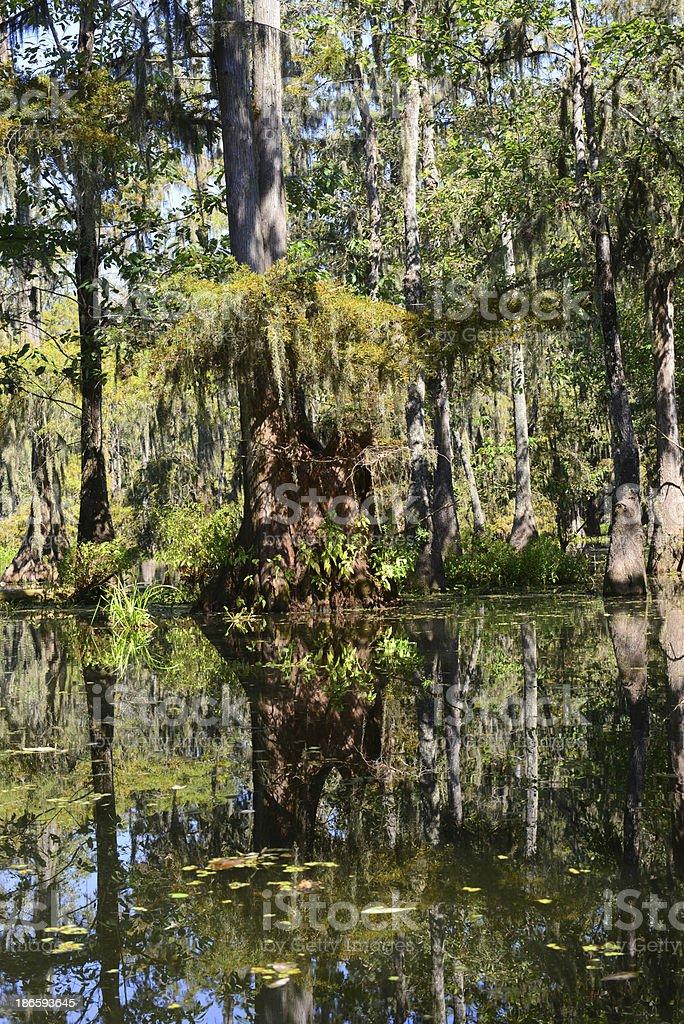 Swamps of Lake Martin royalty-free stock photo