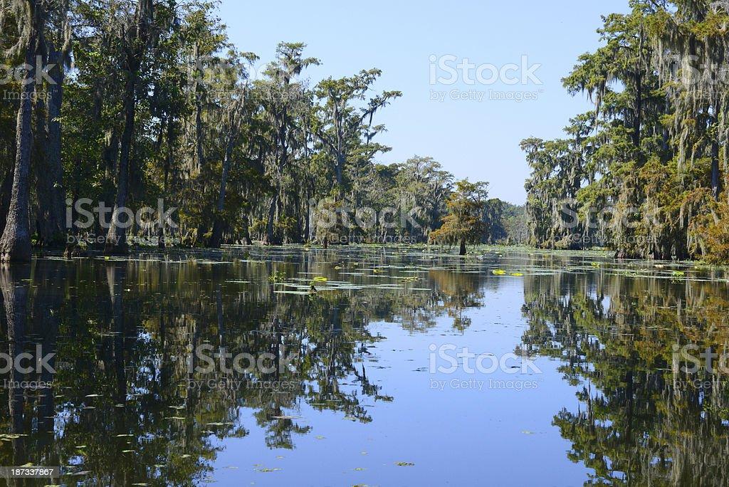 Swamps of Louisiana stock photo