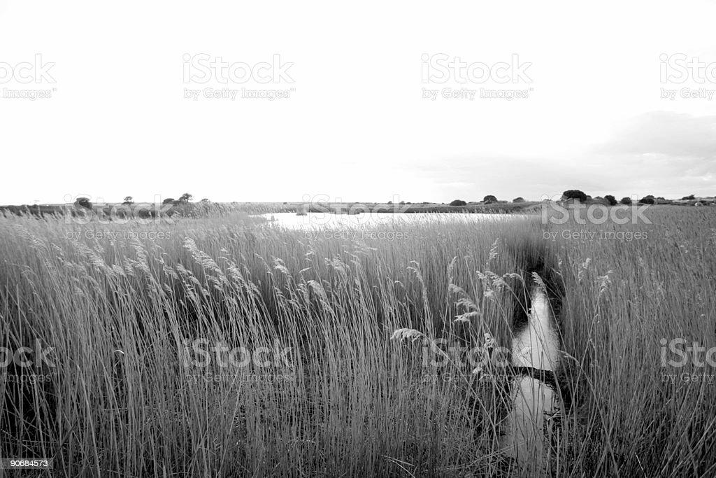 swamps vegetation stock photo