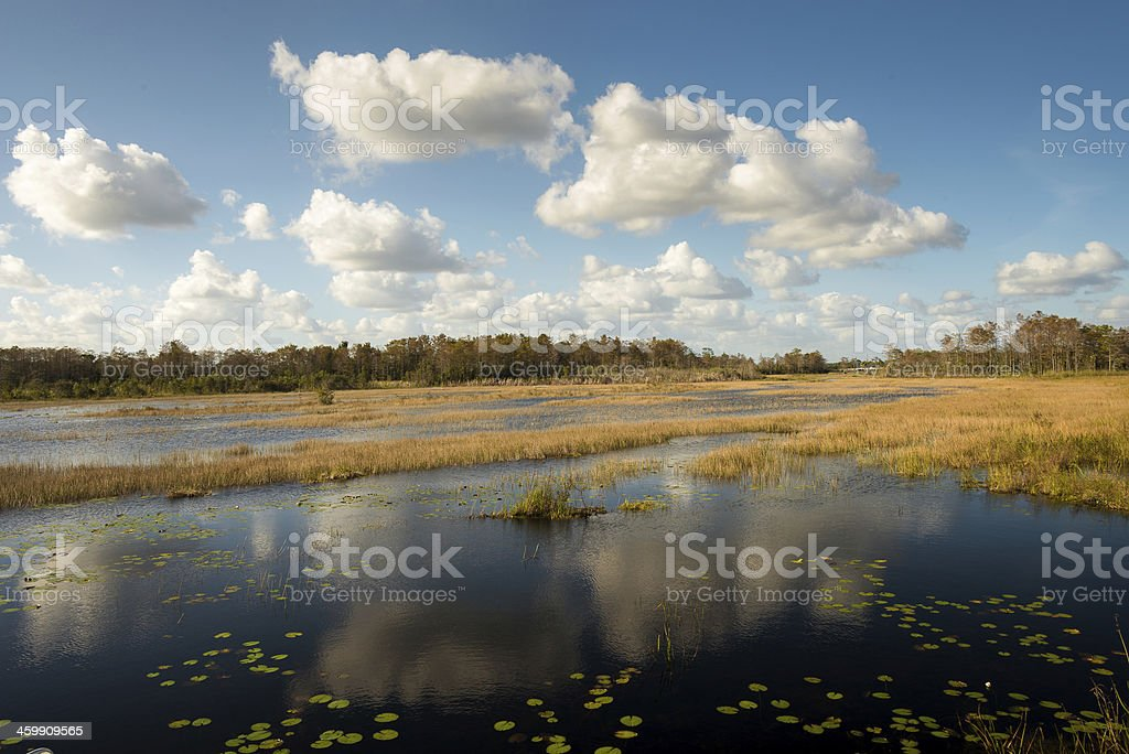 Swampy Ecosystem royalty-free stock photo