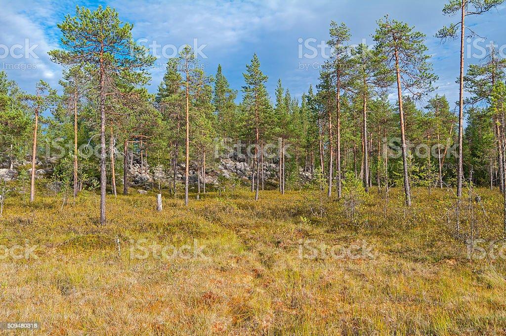 Swampy forest edge. stock photo