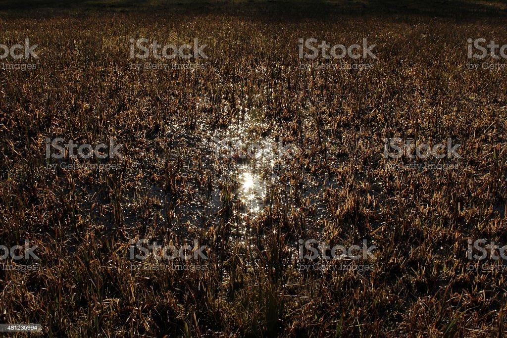 Swampy stock photo