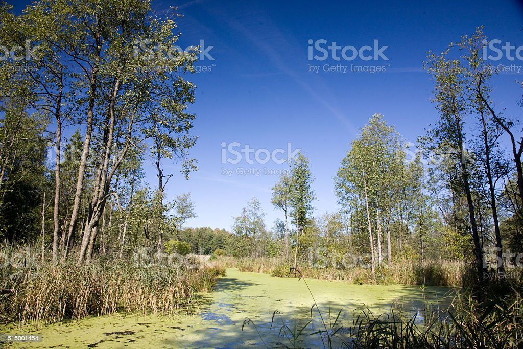 Swampy valley of Lesna River in sunny autumnal day stock photo