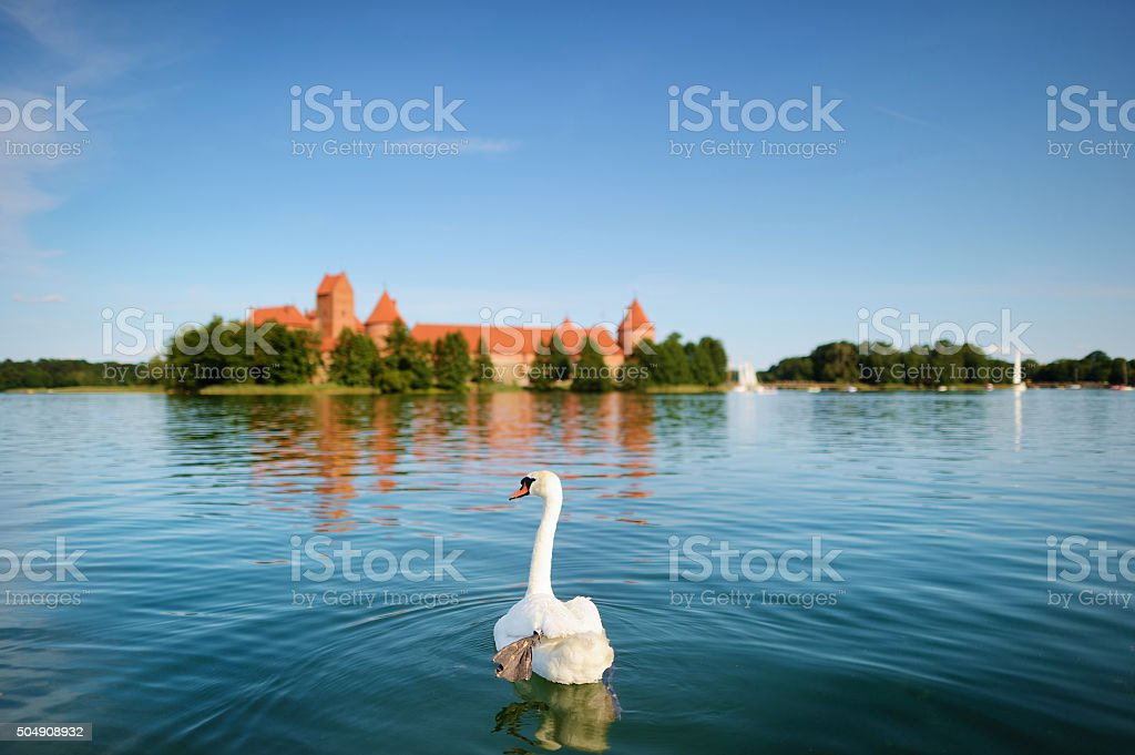 Swan and the Trakai castle in a background stock photo