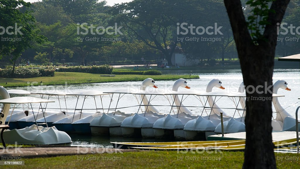 Swan boat in lake park stock photo